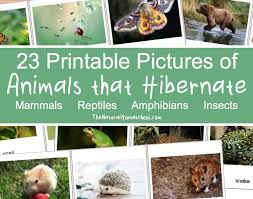 23 printable pictures of animals that hibernate the natural