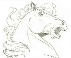 47 best horse 2d images on pinterest horses animal anatomy and