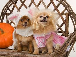 dog halloween costumes images 18 diy pet costumes for halloween laurelwood animal hospital