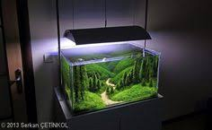 Pacific Aquascape This Would Be A Nice Pacific Northwest Setup Digging The Pebbles