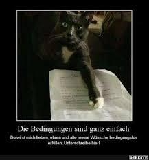 s e katzen spr che die bedingungen sind ganz einfach lustige bilder sprüche