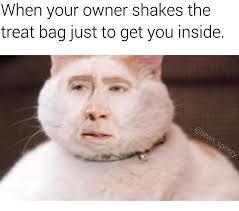 Nicolas Cage Face Meme - 41 dank memes of the week funny gallery ebaum s world