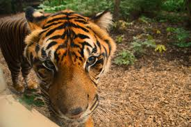 fort wayne children u0027s zoo indiana u0027s 1 summer u201cgotta do u201d attraction