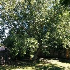 chippers tree service 30 photos 51 reviews tree services