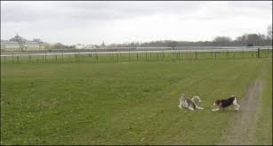 Quelle Race De Chien Choisir Test by Et Si Vous Adoptiez Un Chien De Laboratoire Cause Animale Wamiz
