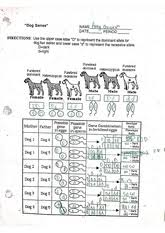 tropic levels worksheet a food web is a complex network of