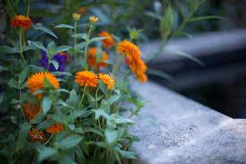 desktop wallpaper summer chicago botanic garden