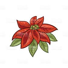 botanical christmas plants ornament stock vector art 612255164