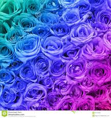 colorful roses colorful roses background stock image image of colorful