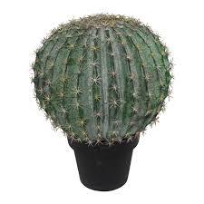 buy abigail ahern goldenball cactus plant amara