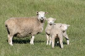 De by File Fauna De Nueva Zelanda07 Jpg Wikimedia Commons