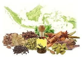 obat kuat alami dari tumbuhan dan cara membuat obat kuat alami