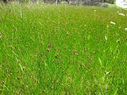native oklahoma plants oklahoma eco landscaping