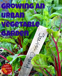 sunny simple life growing an urban vegetable garden tips and