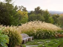 194 best ornamental grasses images on ornamental grasses