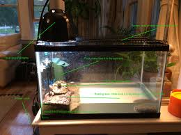 uvb light for turtles turtle care slate and scoria