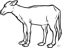cow calf coloring page free printable coloring pages