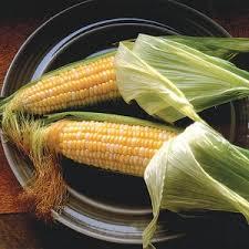 bloody butcher corn ornamental corn seeds ne seed