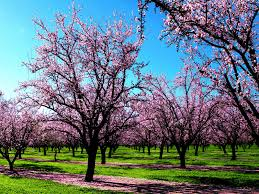 nature spring wallpapers free photos part 2