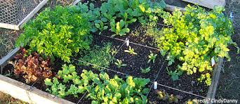 How To Plant A Vegetable Garden In Your Backyard eartheasy blogmaking the most of a small space garden eartheasy blog