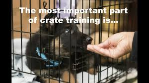 crate training crate training a puppy schedule what rules apply when to let