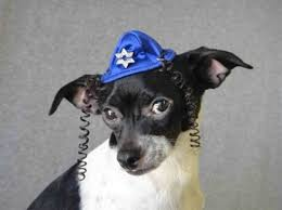chanukah hat hat cat or dog