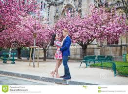 romantic couple in paris with cherry blossom trees stock photo