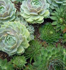 ornamental plants what is the difference between cactus and a