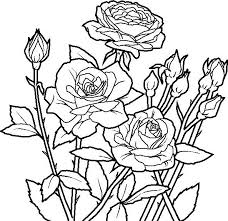 garden coloring pages flowers rose flowers rose