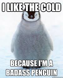 Peguin Meme - i like the cold because i am a badass penguin that s funny stuff