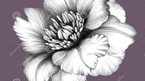 100 with a flower pencil drawing a drawing of a flower step