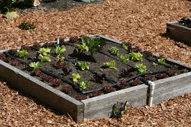 Vegetables Garden Ideas Fantastic Backyard Vegetable Garden Ideas
