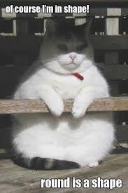 Success Cat Meme - best 30 cat memes cutest cats