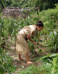growing food plimoth plantation