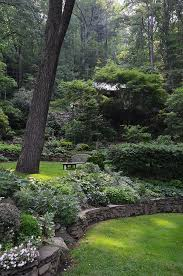 Shady Backyard Ideas 25 Trending Wooded Backyard Landscape Ideas On Pinterest Forest