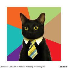 Business Cat Memes - business cat advice animal meme poster rf bfdf ad ab da zaz byvr