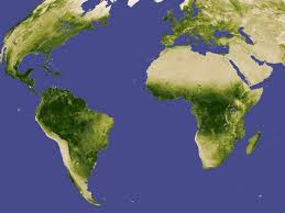 Trees Worldwide Paper Ecology Global Network