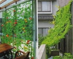 Climbing Plant Supports - nylon trellis netting plant support for climbing plants vine and