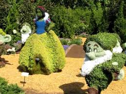 snow white and the seven dwarfs topiary epcot flower and garden