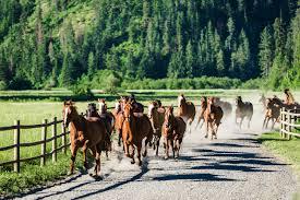 idaho guest ranches visit idaho