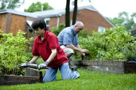 4 important lawn care tips for fort worth tx lawnstarter