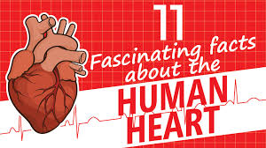 11 fascinating facts about the human
