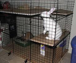 Rabbit Hutch Set Up Housing Your Rabbit