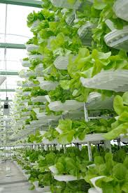 How To Build A Vertical Hydroponic Garden Vertical Farming Wikipedia