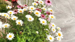 100 best and romantic flower gardens creative landscape ideas