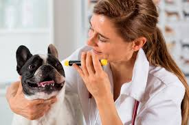 Causes Of Sudden Blindness In Dogs Retinal Detachment In Dogs Symptoms And Signs