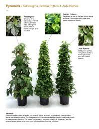 custom 20 best indoor office plants inspiration of 9 low