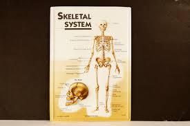 vintage 3d human body chart skeletal system human skeleton