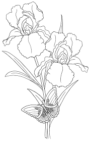 iris flower outline drawing sketch coloring page