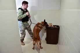 belgian shepherd nc the nose goes military working dogs and their handlers train to